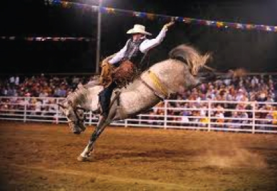 Bronc Rider in the Golden Spike Rodeo